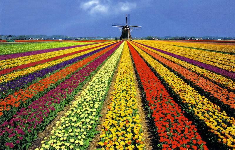 семена разных цветов доступны по ссылке